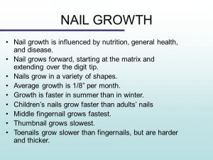 What Is The Average Growth Rate Of Nails In Adults