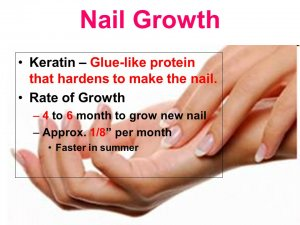 Fingernails Stopped Growing, toenails stopped growing, nails stopped growing, nails not growing, slow nail growth