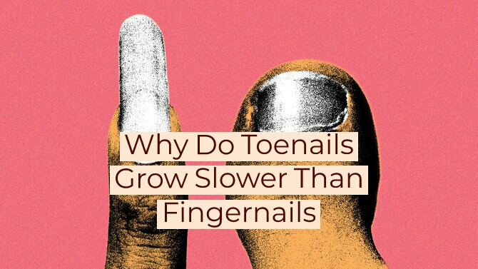 Why Do Toenails Grow Slower Than Fingernails?(Reasons)