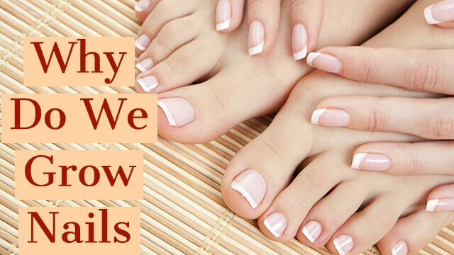 Why Do We Grow Nails? Number #2 Reasons Will Shock You